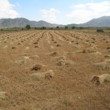 Το οροπέδιο Ομαλού καλλιεργείται από αρχαιοτάτων χρόνων.