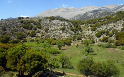 Kalikas plateau